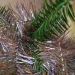 Какие хвойные деревья бывают новогодними ёлками?